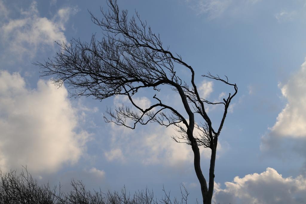 Windzerzaust sieht dieser Baum aus, aber der Himmel ist meist klar