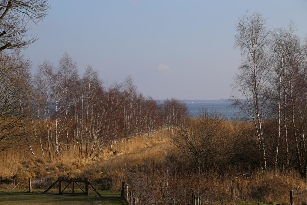 Zwischen dem Büdnerhaus und dem Bodden befinden sich Wald und Felder – und manchmal zeigen sich hier Rehe